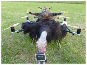 A netherland creator after cat has started work on Buffalow drones