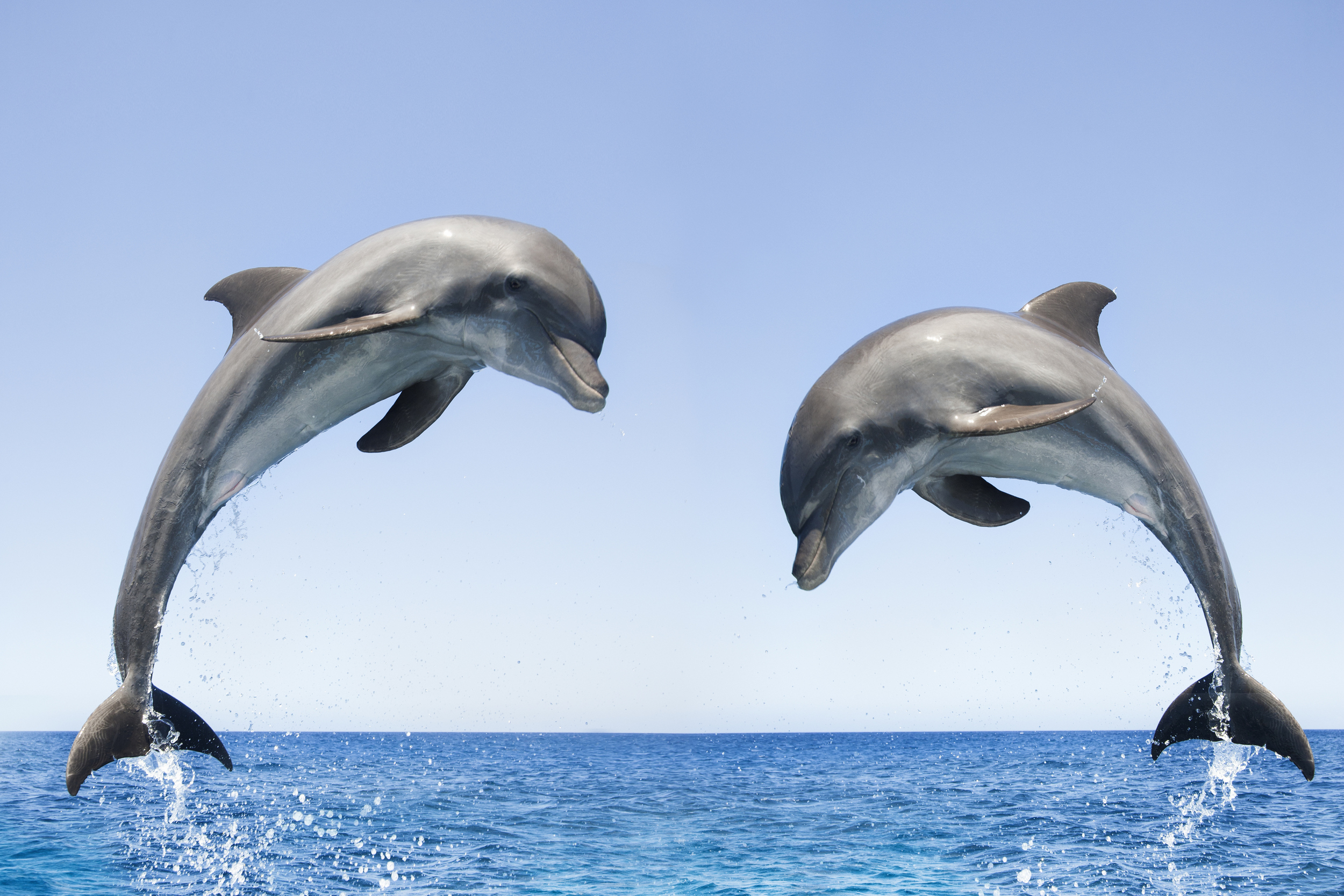 Dolphins communicate like humans see how