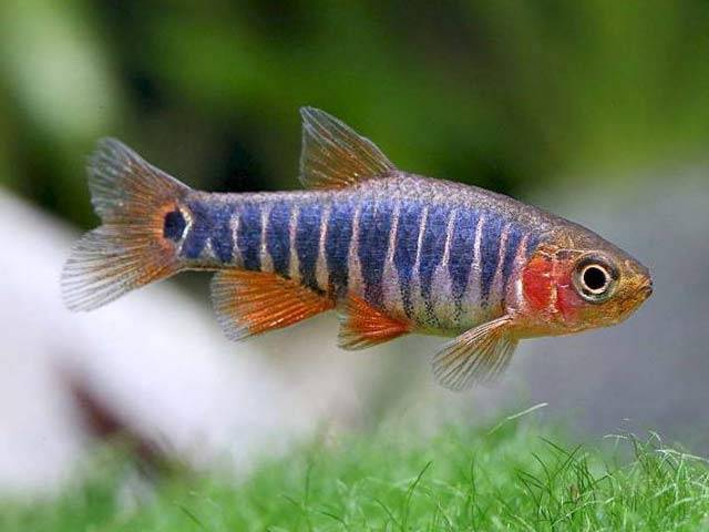 A first nano fish is ready to provide the medicine to exactly needed part of a body