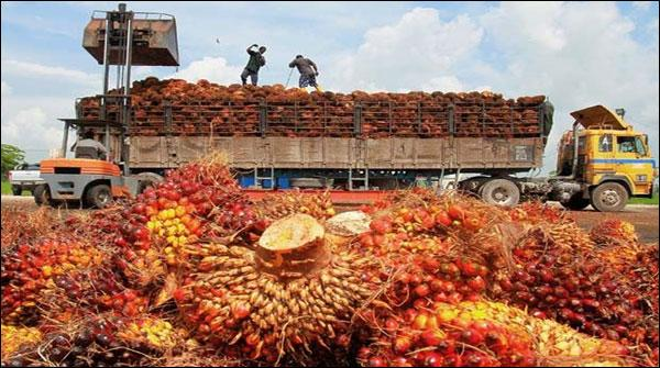 Also see this news that Malaysian Palm Oil reached to the higher levels of 6 months