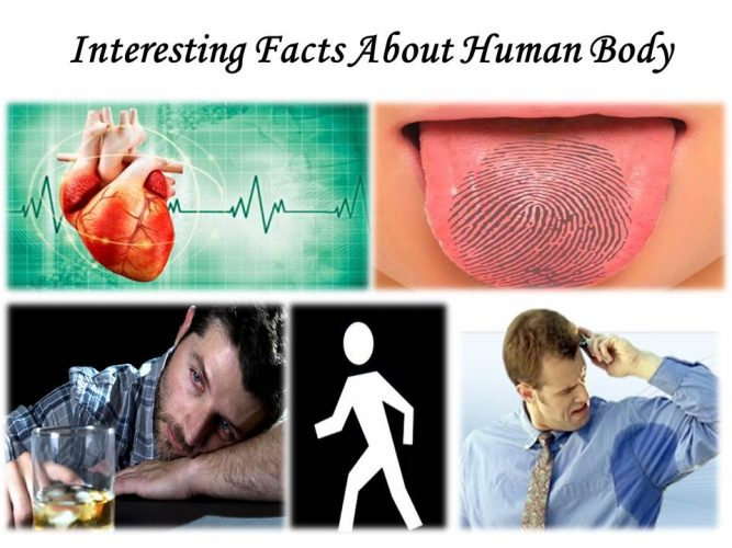 Interesting Facts About Human Body