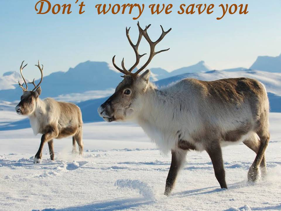 Reindeer hunted by hunters get safety app